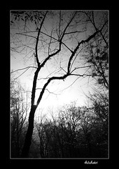 (Ali Shokri / www.alishokripix.com) Tags: fdsflickrtoys iran azerbaijan loveit chapeau ايران themoulinrouge naturesfinest blueribbonwinner bwdreams supershot تبريز justimagine 5photosaday outstandingshots shieldofexcellence platinumphoto anawesomeshot aplusphoto unature visiongroup superbmasterpiece treesubject diamondclassphotographer flickrdiamond megashot bratanesque frhwofavs ysplix superlativas onlythebestare eliteimages naturewatcher fiveflickrfavs flickrslegend proudshopper goldstaraward picswithsoul stealingshadows alemdagqualityonlyclub wwwalishokricom alishokri magicdonkeysbest oraclex