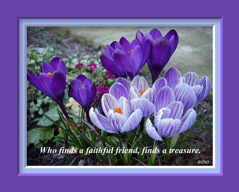 Sorea Rea Blog Friendship Quotes With Flowers