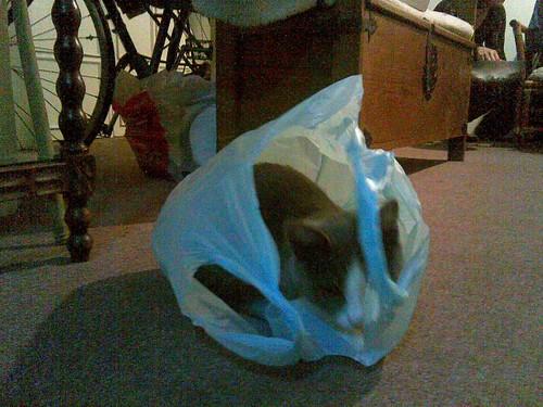 gato bolsa
