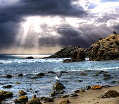let there be light (Kris Kros) Tags: ocean light sun bird beach rock photoshop photography coast high nikon highway bravo ray dynamic pacific seagull beam pch be there bec range let sunbeam hdr sunray kkg cs3 photomatix 5xp kkgallery