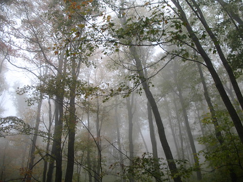 foggy trees 2