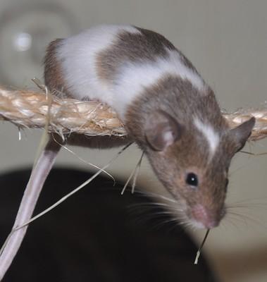 Lilly auf dem Seil