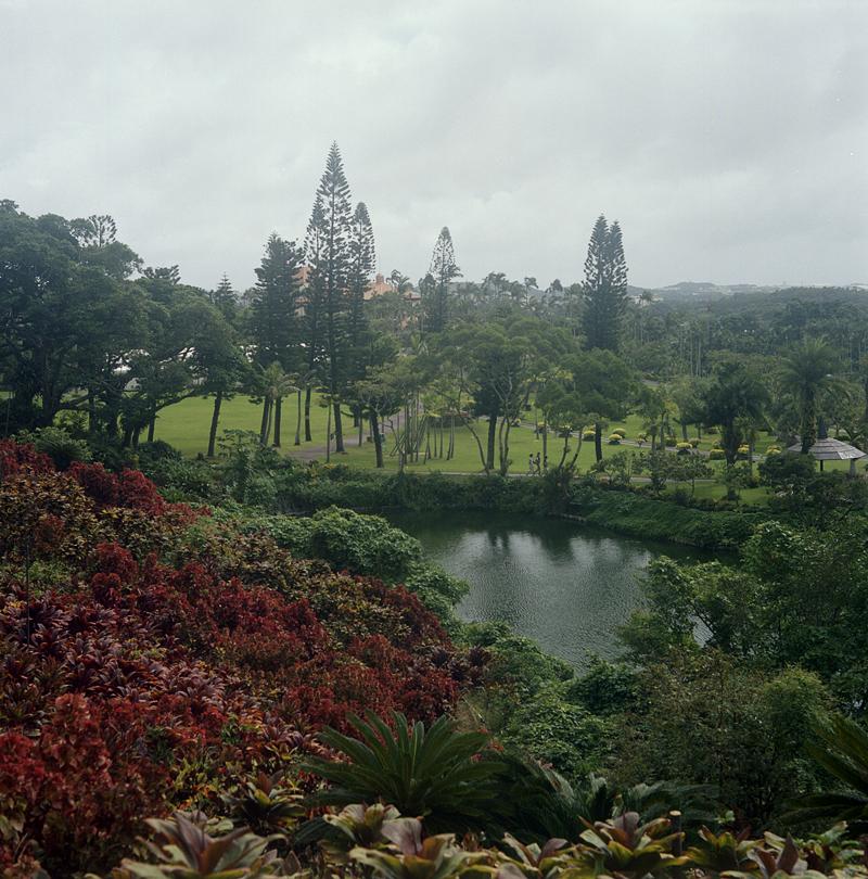 沖縄の植物園