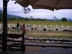 花蓮瑞穗牧場