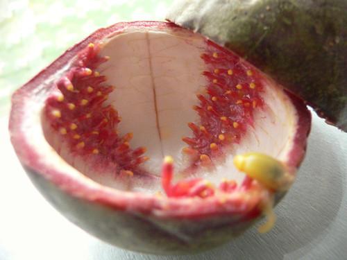 Passionsfruchtschale