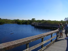 CIMG6561 (J_Dub) Tags: park wedding florida gator alligator national everglades haley bentley natio