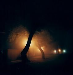 Park, Sunnyvale Color (I Am Adam) Tags: shadow orange black tree 120 film yellow fog night holga kodak eerie spooky 120mm 400cn