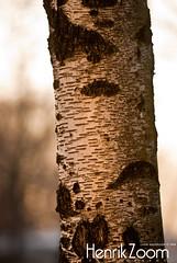 Sunset tree (Lasse A.) Tags: winter sunset cold suomi finland frozen vinter frost turku bo talvi ilta auringonlasku åbo jäätynyt tuku kylmä kvll kylm