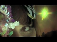 mi_consuelo-00d (www.bevarela.com) Tags: bostonterrier videoart finalcutpro visualeffects videodance moleculagem colorgrading applecolor imagecompositing