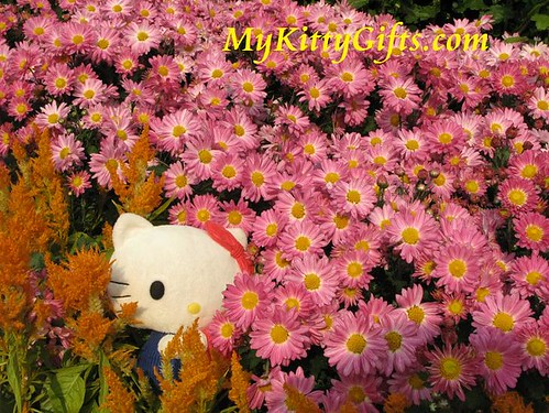 Hello Kitty Hiding in Pink Chrysanthemum Hedge in Hong Kong Orchid Trip