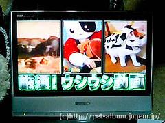 NHK−BS2「ザ☆ネットスター」テレビ番組で紹介