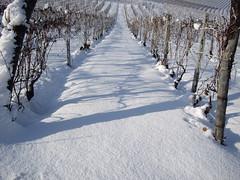 Snow, again!! #05 (danypassa) Tags: white snow ice home casa vineyard pentax piemonte neve bianco piedmont ghiaccio asti monferrato vigna