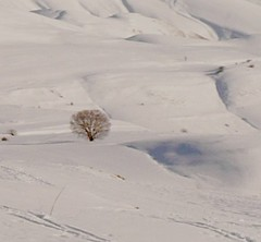 Lost in the white (manu/manuela) Tags: mountains tree montagne landscape pg outoffocus paysage albero arbre montagna paesaggio umbria lonelytree castelluccio sibillini vettore ombrie montevettore montesibillini gnneniyisithebestofday mauvaisemiseaupoint