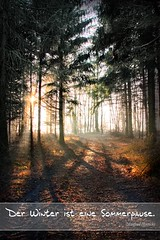 Helbetal Sonnenlicht im Wald