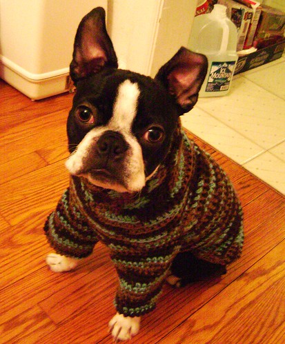dog knitting patterns - Web - WebCrawler