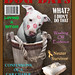 Funny Dog Days Magazine Cover, Rescued White Puppy Dog Kahuna Luna featured on the cover! American Staffordshire Terrier, Pit Bull Fame