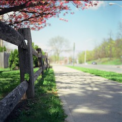 Path to Summer (Inside_man) Tags: pink green texture 120 6x6 tlr film colors fence mediumformat colorful minolta blossom bokeh lawn lightandshadow autocord minoltaautocord fuji400h pathtosummer