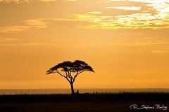 African Sunrise in Amboseli National Park, Kenya (sbailliez) Tags: africa travel sunset wild plants sun tree tourism nature beautiful beauty silhouette sunrise landscape golden scenery colorful warm natural bright kenya african relaxing scenic safari clear destination savannah backlit plains bushes idyllic acacia radiant savanna amboseli