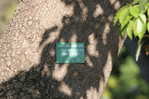 what that tree is scientifically called