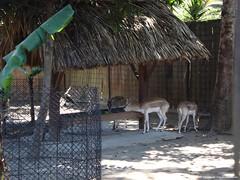 DSC02169 (Fernando Reyes Palencia) Tags: animales paisajesdeguatemala bellospaisajesdeguatemala fotosdeguatemala fernandoreyes guatemalalandscapes fotosfernandoreyes imagenesdeguatemala postalesdeguatemala