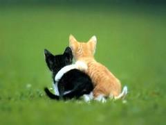 ...Há dias em que tudo que precisamos é um abraço... por Dona MaryCota