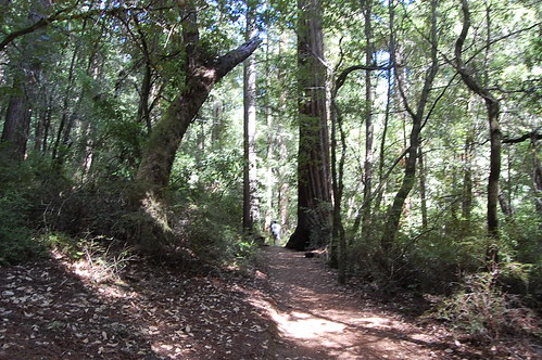 Redwood Creek Canyon