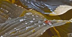 Water Leaf (Supreme Thinker) Tags: park street newyork garden wonder leaf picture orchard falling batterypark narrative artistist
