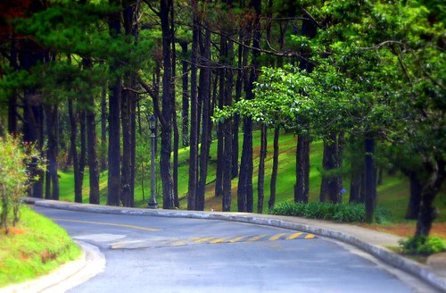 The Forests of Baguio