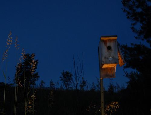 Dusk at the Bird House