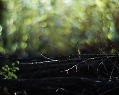 fallen dream (futureancient) Tags: trees bokeh branches ash burntout laidtorest canonf095 leicam8
