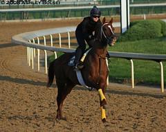 Bernard Flint trainee puts on a big smile (Niteowl8675) Tags: morning horse smile race racing churchill chestnut breeze workout flint thoroughbred thoroughbreds gallop bernardflint