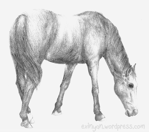 Skinny Horse Drawing Horse Pencil Drawing