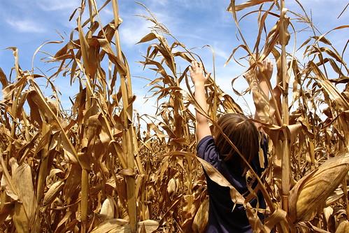 Kid in the Corn