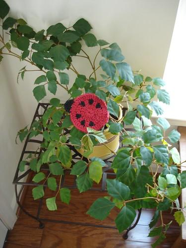 Ladybug Coaster 02