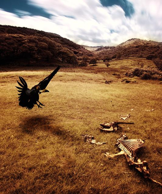 Vulture & Carcass