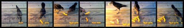 animal detector camera trap