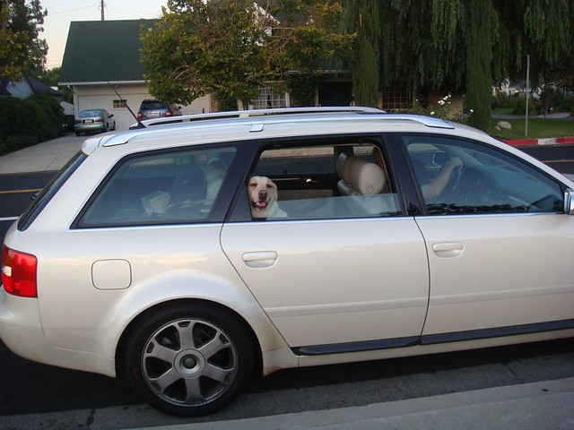 cars dogs wagon losangeles southerncalifornia sanfernandovalley encino pearlescent lydiamarcus fotonomous curioustransport httpfotonomousblogspotcom 2002audis6avant