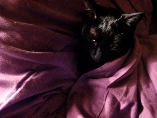 cozy animal