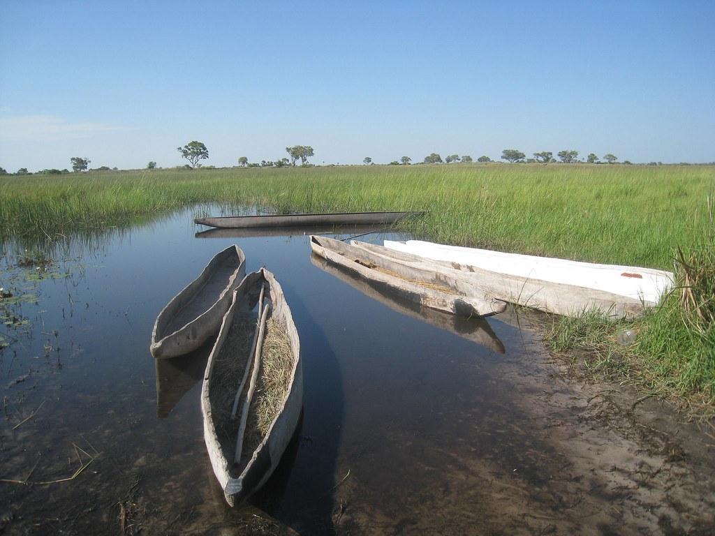"Wooden mokoros ""docked"" near our campsite."