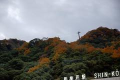 Kobe   (ddsnet) Tags: autumn plant leaves japan sony autumnleaves kobe  nippon  autumnal nihon 900  backpackers        leaves   autumn  autumn  hygoken  leaves 900  kbeshi