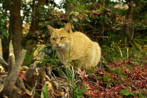 Stray Cat #35