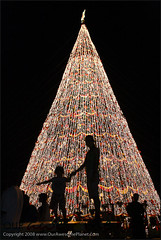The Tallest Christmas Tree-6