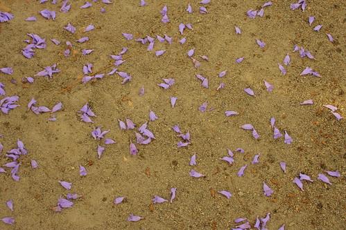 carpet of violet