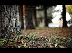 Day Nine (Dustin Diaz) Tags: autumn cold fall colors leaves 50mm google nikon dof seasons bokeh crop frame 365 nikkor friday googleplex featured project365 50mmf14g dustindiazcom d700 ehbd