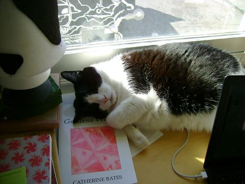 sleepy sunny kitty