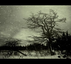austerity (Stephen's PhotoArt) Tags: snow adaptation mountstorm memoriesbook texturebyjaiel