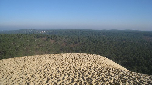 A view over the dune toward the forests