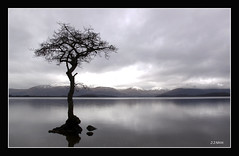 Stranded at Milarrochy Bay (j j nicol) Tags: sky tree water d50 scotland nikon hills lochlomond balmaha milarrochybay jazza1969