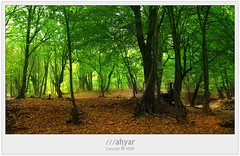 Likeness Paradise # 2 (///ahyar) Tags: likeness paradise 2       seyfi s5is picture photography persian nice natures nature mahyar jungle landscapes landscape iran green gorgan golestan gathering colors color canon beautiful autumn alangdareh
