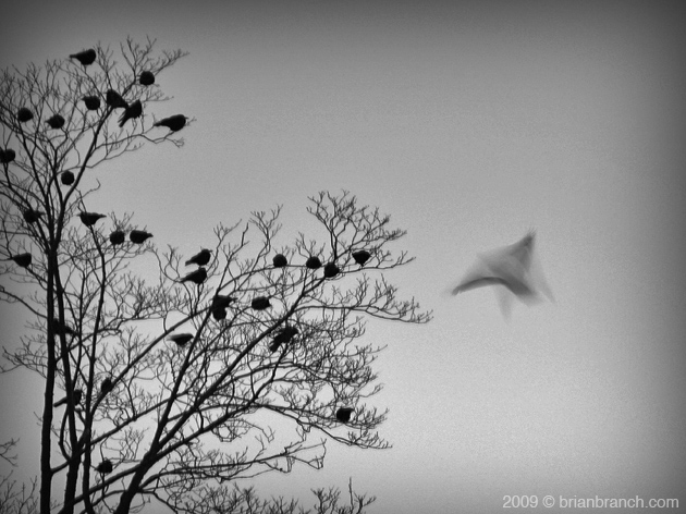 SN851010_birds